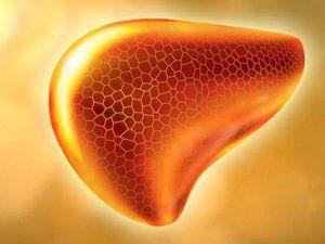 Негативний вплив алкоголю на печінку