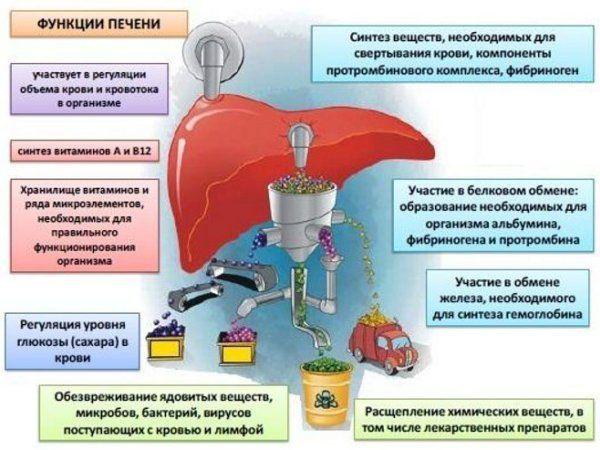 функції печінки
