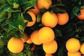 апельсинова настоянка