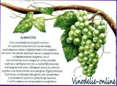 Сорти білого винограду