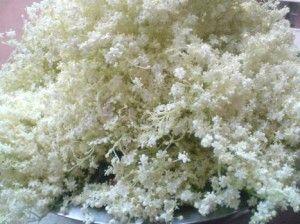 квіти бузини