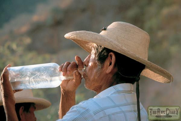 Що таке текіла і звідки взявся цей напій