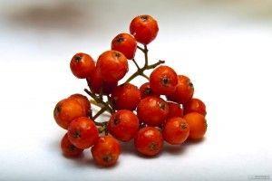 ягоди горобини