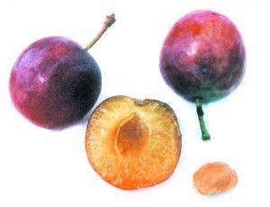 ягода сливи в розрізі