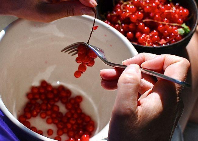 Червону смородину помити і перебрати