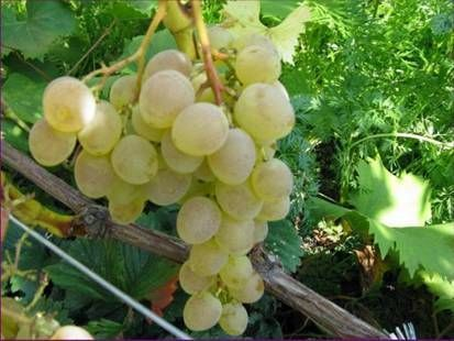 Приготування їжі з вином