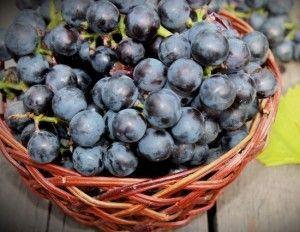 Наливка на винограді сорту ізабелла з горілкою