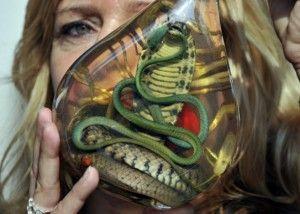 горілка зі змією