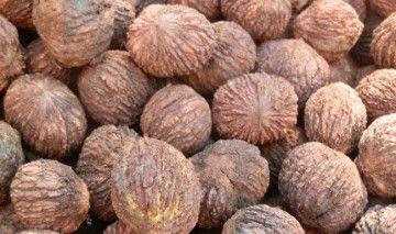 Настоянка чорного горіха - цілющий ліки від природи