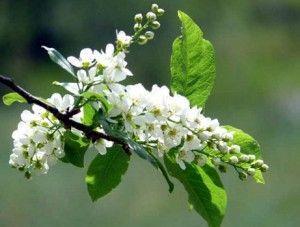 Незвичайні рецепти настоянок, лікерів і вина на квітах