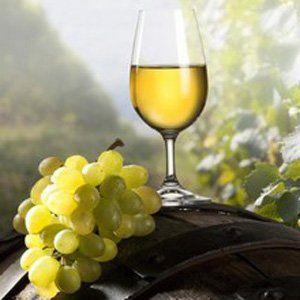 Виробництво вина