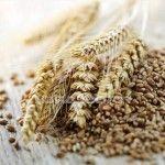 Пшенична брага без дріжджів