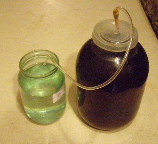 фото водяного затвора для барбарисовий вина