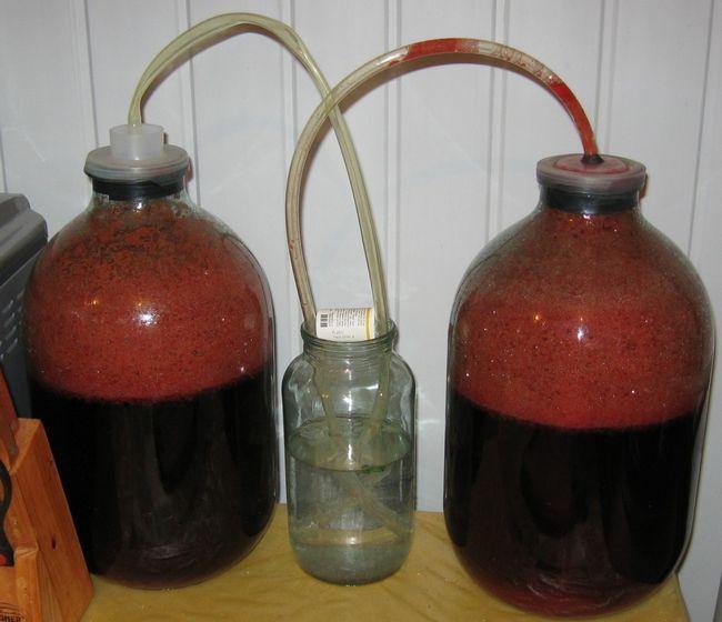 фото водяного затвора для шовковичного вина