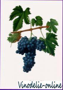 Виноград «рислінг»