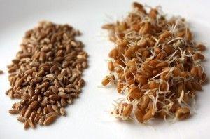 пророщене зерно