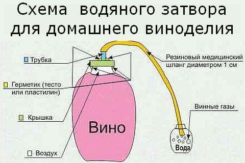 Вино з агрусу в домашніх умовах простий рецепт, вино з агрусу в домашніх умовах рецепт без дріжджів, вино з агрусу в домашніх умовах рецепт з радянських часів