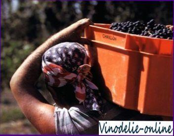 Виноробство в Північній Америці