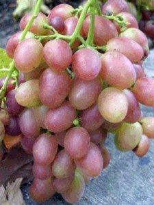 Виноград мускат рожевий