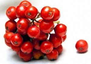 ягоди червоної горобини